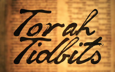 "Torah Tidbits: Shoftim – ""Judge Not"""